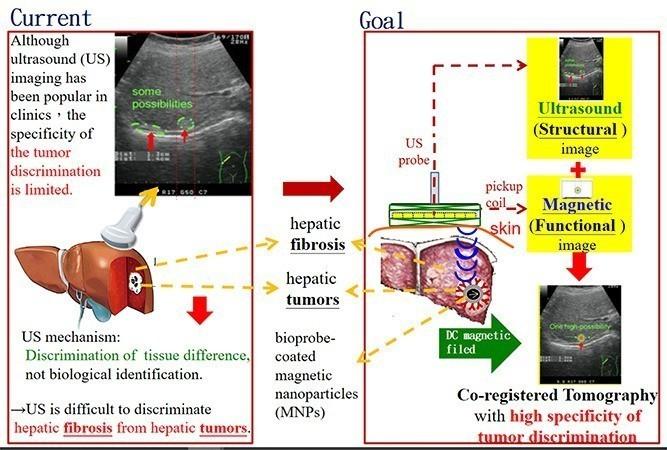 強勢辨識奈米標靶腫瘤的超音波與磁性雙模態造影術