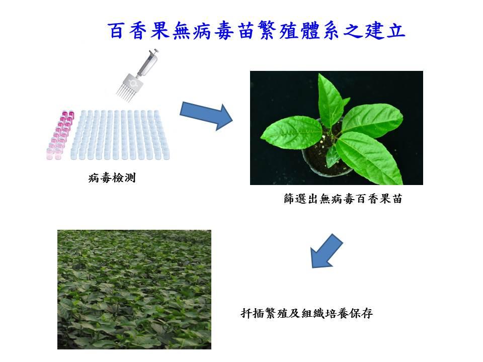 台灣之光!中興大學無病毒苗繁殖技術 助越南晉身百香果大國